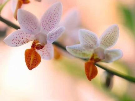 Super Orchideen wieder zum Blühen bringen | Orchideenzentrum @LL_45