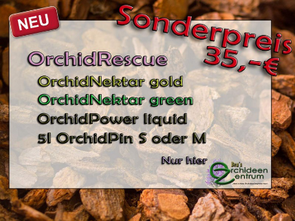 Angebot Orchideenzentrum